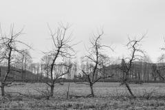 Eagle Haven Winery Vineyard in Winter